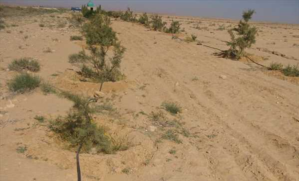 Property Land for sale Luxor