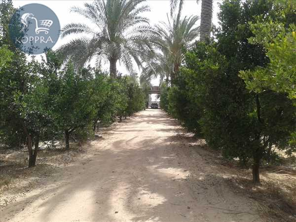 Property Land for sale Cairo